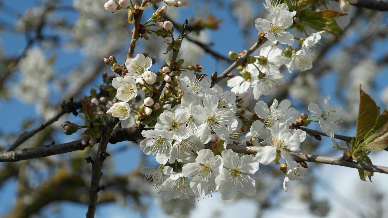 Haz tu jardín paso a paso - árboles en flor
