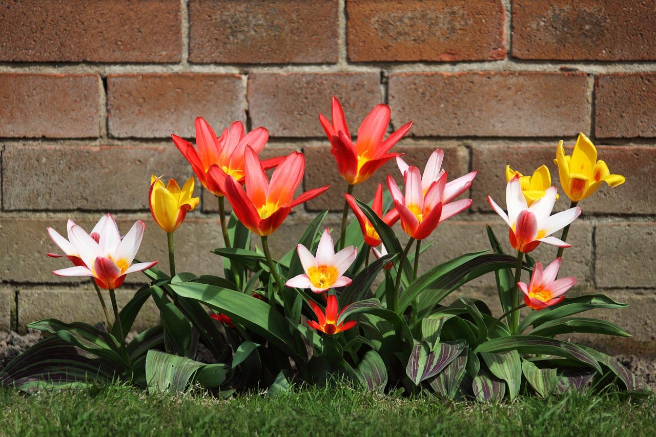 Jardines y sus cuidados