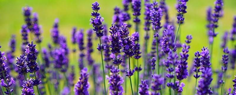 El jardín y la primavera - Blog Matura